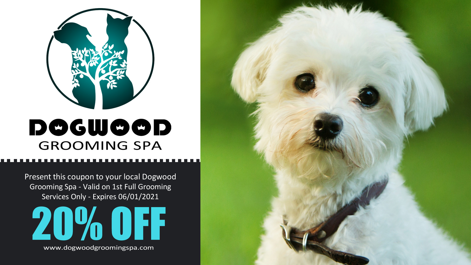 Dogwood Grooming Spa LLC on Best In Search | Professional Pet Groomer in Knoxville Tn | Offering Full Dog Grooming, Creative Pet Coloring, and Pet Boarding